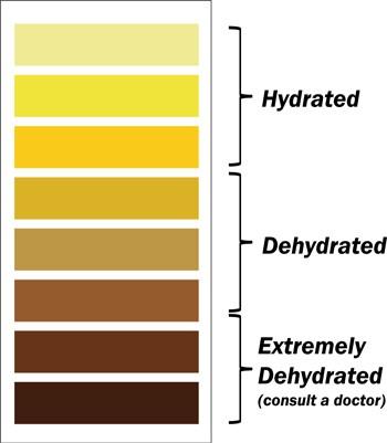 Hydration chart